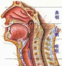 鼻咽(yan)癌 百科